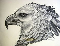 harpy eagle drawing - Google Search