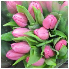 Wholesale Wedding Flowers - Buy in Single Bunches