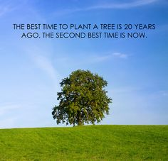 The best time to plant a tree is 20 years ago. The second best time is today.