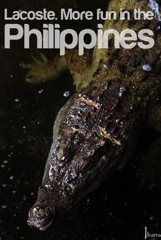 Lacoste - More Fun in the Philippines! #itsmorefuninthephilippines