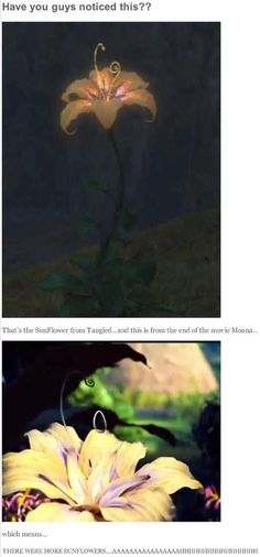 Theory that Moana had more magic sunflowers from Tangled OMG