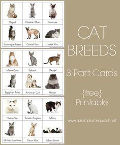 3 Part Cards ~ Cat Breeds {free Montessori nomenclature printables}