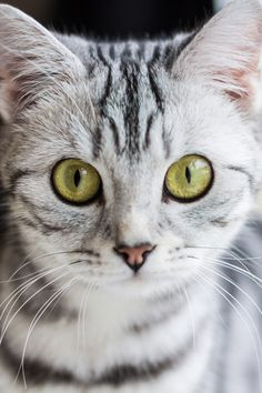 .Looks like a cat I once had, her name was Cream