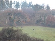 Winter walks, Cornwall - the lonely pony