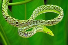 If you've never appreciated snakes, these beauties might just change the way you think about them.