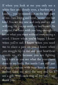 dog training,teach your dog,dog learning,dog tips,dog hacks I Love Dogs, Puppy Love, Pet Loss Grief, Dog Poems, Pet Remembrance, Yorkshire Terrier Puppies, Dogs And Puppies, Doggies, Pet Dogs