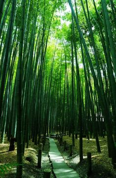 報国寺 Houkoku-ji Temple, Kamakura, Japan  | #緑 #Green #Kamakura