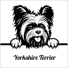 Terrier Breeds, Dog Breeds, Yorkshire Terrier Dog, Dog Silhouette, Animal Quilts, Yorkie Puppy, Black And White Illustration, Jack Russell Terrier, Vector Stock