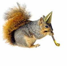 Happy Birthday you old diva xxxxxx Animal Birthday, Birthday Fun, Birthday Wishes, Happy Birthday Squirrel, Squirrel Memes, Puppetry Arts, Animal Party, Party Animals, Animal Fun