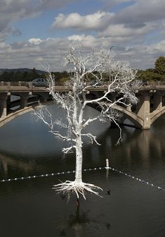 Striking Floating Tree Installation Sits in the Middle of a Lake - My Modern Met