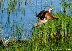 Wetlands & Grassland Habitat: Learn about the benefits of these two key habitat types. Duck Migration, Grassland Habitat, Outdoor Education, Duck Hunting, Wildlife Conservation, Biomes, Natural Resources, Outdoor Life, Natural History