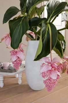 exotisches pflanzen ambiente f r zuhause zimmerpflanzen. Black Bedroom Furniture Sets. Home Design Ideas