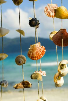 Cortinas y carillones de viento con conchas de mar - Estilo rústico