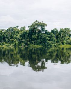 "santiagodehoyos: "" Jungle pouring into a remote lagoon near Puerto Maldonado, Peru. santiagodehoyos on Instagram """