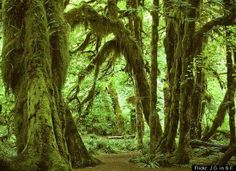 Hall of Mosses, Olympic National Park, WA - you feel like you are stepping back in time.  If you enjoy nature, you gotta go!