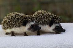 So cute pair!!!
