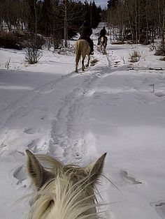 Snow as seen between the ears of a horse