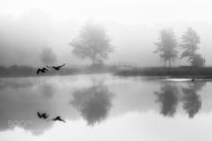Flying away by ErnestVandeWall. Please Like http://fb.me/go4photos and Follow @go4fotos Thank You. :-)