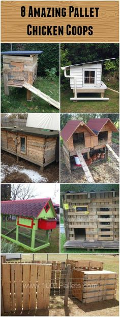 Chickens are one of the best way to green your life and garden. Perfect for kids, they also eat almost every leftover from your food and will provide you w