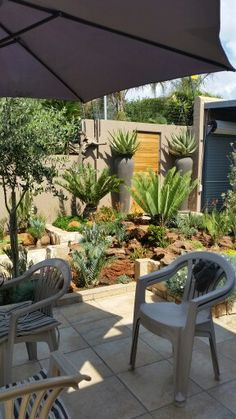 Gardening with cycads