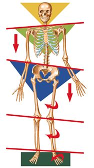 In the case of pelvic tilt resulting from muscular dysfunction, if shortness persists long enough, the spinous curves will reach the neck. Initially the patients will complain of lower back pain, but in time will begin to suffer from chronic headaches and/or neck pain.