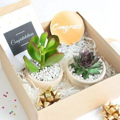 Birthday Gifts For Husband, Mom Birthday Gift, Christmas Gift Box, Perfect Christmas Gifts, Christmas Gift Plants, Diy Gifts Coworkers, Succulent Species, Handmade Gifts For Boyfriend, Flower Box Gift