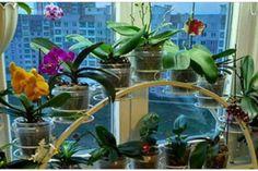 Niciodată nu am mai văzut ca mușcata să înflorească atât de bogat! Iată un remediu simplu! - Fasingur Plants, Google, Interiors, Plant, Planting, Planets