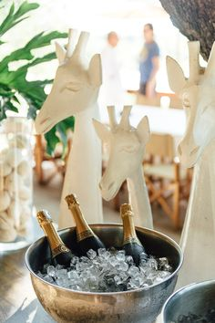 Kyly Zakheim and Ryan Rabin Marry in a Magical Safari Wedding in South Africa Safari Wedding, Safari Party, Safari Theme, Safari Chic, African Wedding Theme, African Theme, African Safari, African Style, Africa Decor