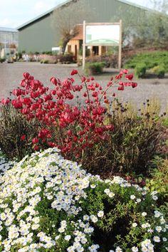 Activiteiten op zondag 19 oktober 2014 bij de Gasthuishoeve. Geniet van de herfstkleuren in onze tuin.