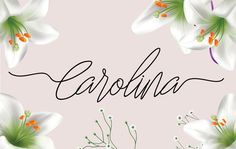 Carolina (limeted time discount) by sinfa.co on @creativemarket