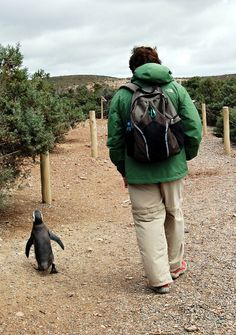 Sometimes you go to a place where you walk with penguins. I want to go wherever that is.