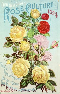 Front cover of 'Our New Guide to Rose Culture' 1894 with an illustration of Perles des Jardins, Bridesmaid, Marion Dingee roses.  The Dingee and Conard Co. West Grove, Pa.  U.S. Department of Agriculture, National Agricultural Library.