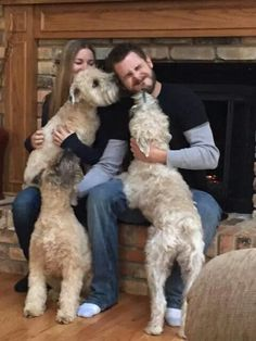 Wheaten love!!! Animals Kissing, Cute Animals, Wheaton Terrier Soft Coated, I Love Dogs, Puppy Love, Cute Puppies, Cute Dogs, Life Is Ruff, Farm Dogs