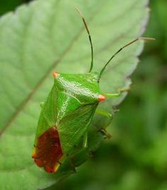 73 Best Garden Bugs - identification & remedies images in