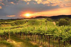 Prenez la route des #vins en #bourgogne #france #vacances #gastronomie