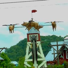 Saw this in Pigeon Forge-Where pigs fly! Old McDonalds Mini Golf............ seen but didnt do