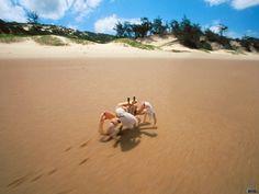 #king_faisal #cool_photos #FaisalSolutions #landscape #beautiful #seas #beach #sunrise #sunset #ART #artists #Dubai #freedom #imagine #faces #mousq #Italian #man #cry #ship #animals #bird's #island #quotes #life #waterfalls #angry #dogs #Riyadh #sky #stars #moon #cloud