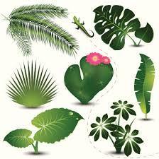 desenho de ramo de folhas - Pesquisa Google