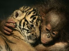 Photos: Animals get in on the cuddling trend | HLNtv.com