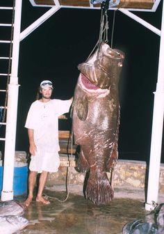 15 Best Oceans Biggest Grouper Fish Images Pisces Gone Fishing