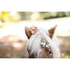Horse with flowers in mane