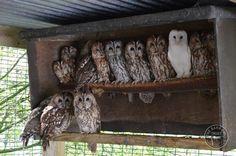 Barn Owl Trust (@BarnOwlTrust)   Twitter