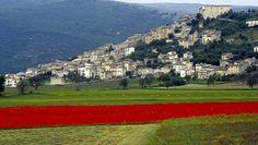 Navelli, campi di zafferano, Abruzzo