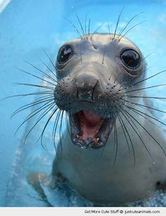 Ocean Animals | Happy Sea Lion