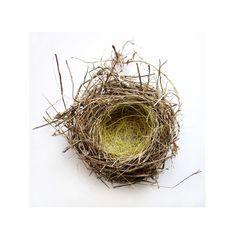 abandoned birds' nest