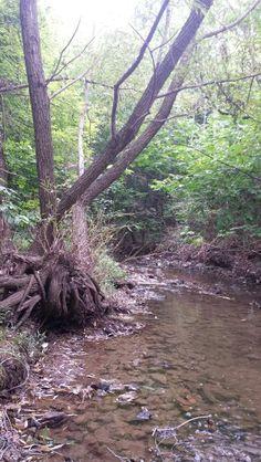pretty tree roots