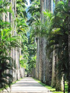 Avenue of Royal Palms, Jardim Botanico, Rio de Janeiro