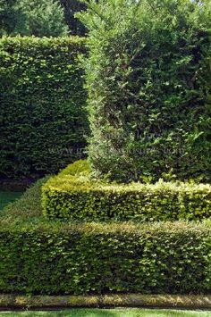 Love this double stacked hedge look!