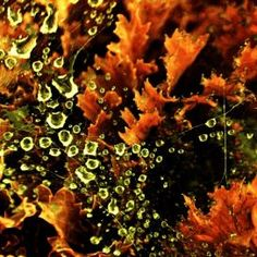 Web & Dew www.palkievent.com
