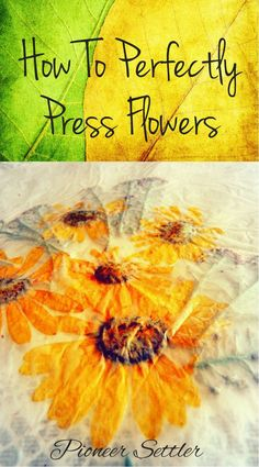 How To Perfectly Press Flowers | Learn how to save your colorful flowers by drying or pressing them. Great for crafts, decoration or even gifts!